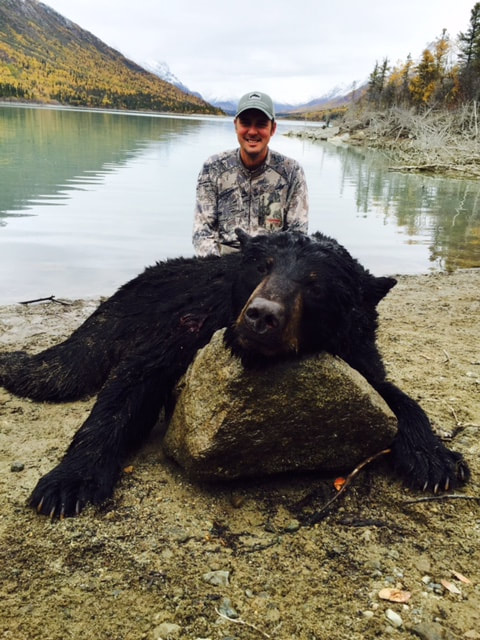 Unguided Black Bear hunting in Alaska