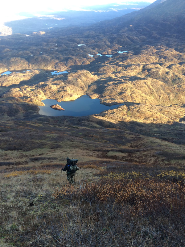 Unguided bear hunting in Alaska
