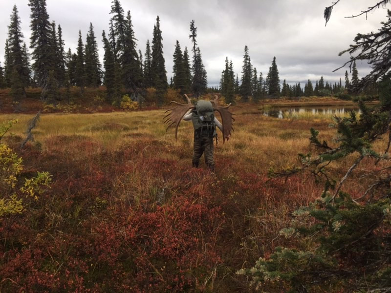 Moose hunting DIY trips